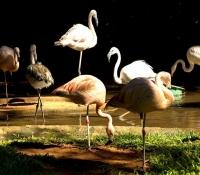 Curitiba Brasil - Flamencos Parque de Aves