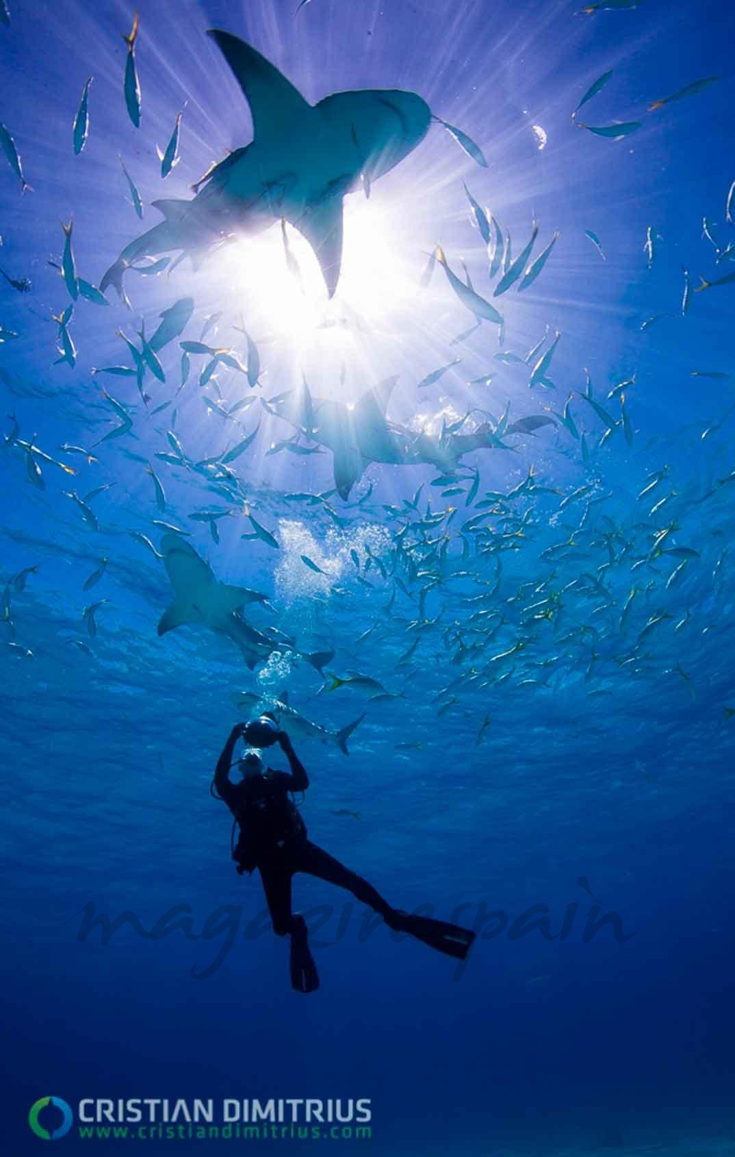 Buceo Tiburones - Bahamas © Christian Dimitrius/ Bahamas Ministry of Tourism