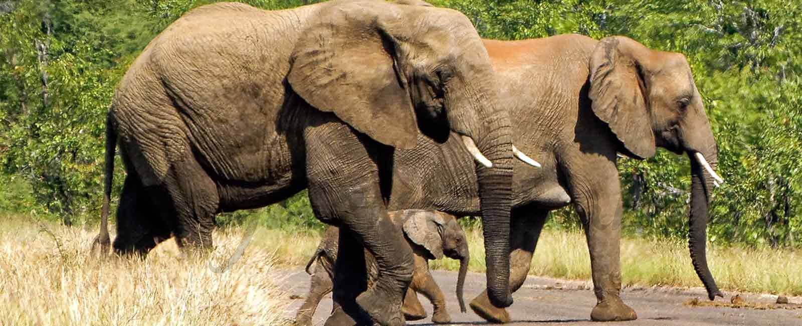 Todo es posible en Sudáfrica: Parque Kruger