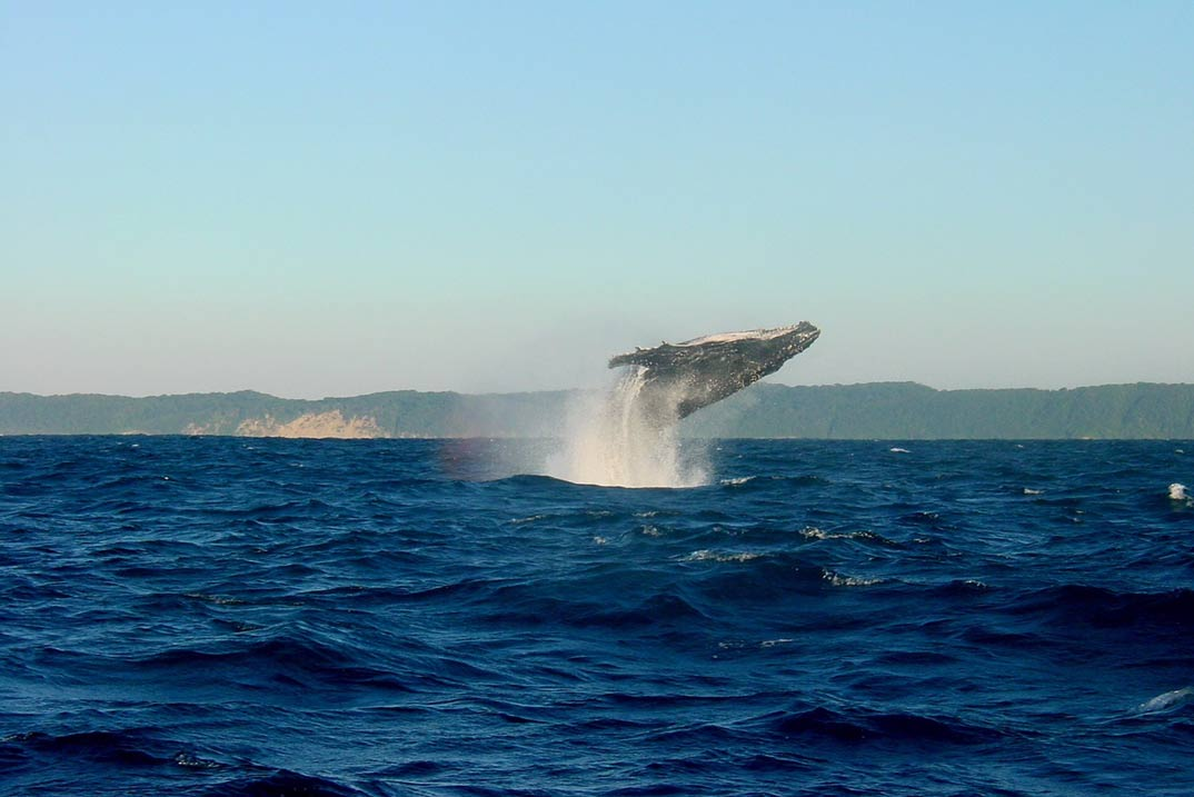 Madeira, un auténtico paraíso para el avistamiento de ballenas y delfines