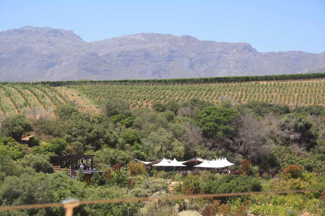 Todo es posible en Sudáfrica: Stellenbosch y la Ruta del vino