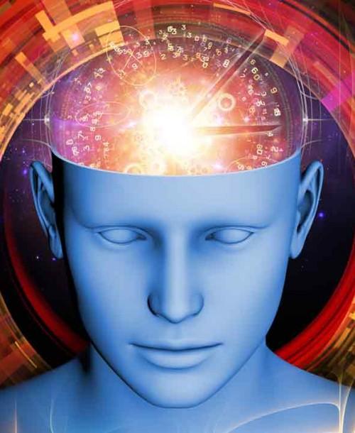 En tu cerebro habita un reptil