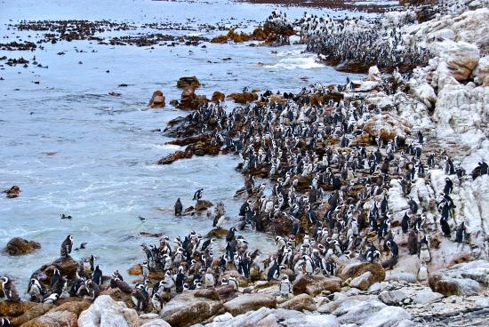 stony-point-penguin-colony