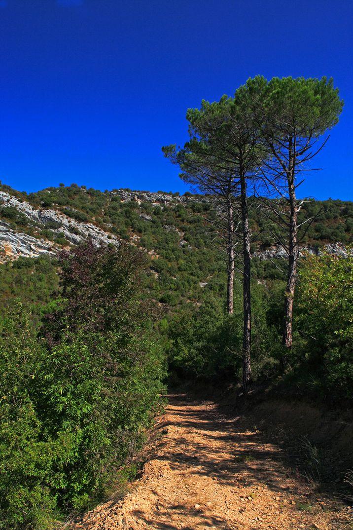 Espacio natural Montes Obarenses San Zadornil