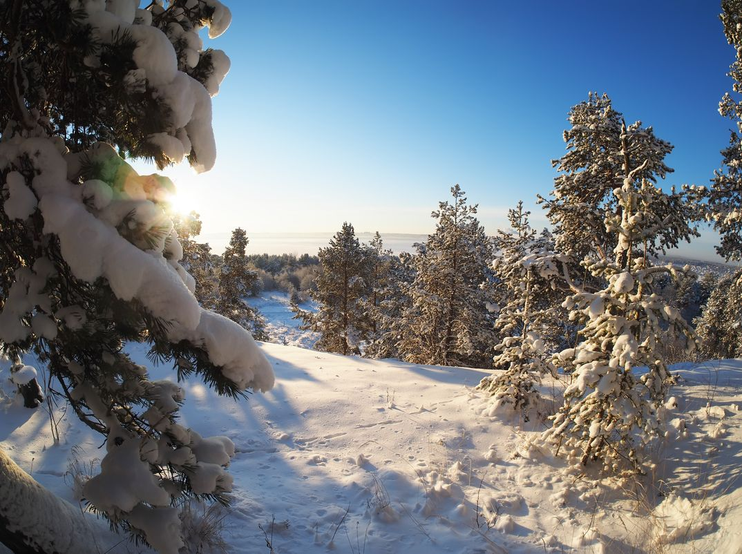 Senderismo por los bosques de Rovaniemi