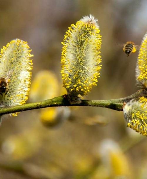 Cómo combatir la alergia primaveral