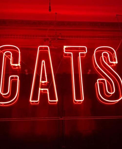 """Ha vuelto Cats, El """"Party Hostel"""""""
