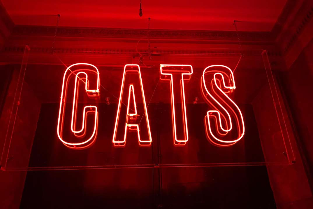 "Ha vuelto Cats, El ""Party Hostel"""