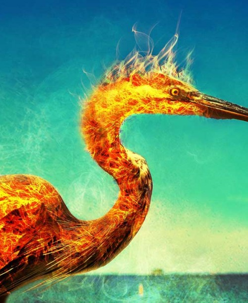 La resiliencia: Cómo resurgir como el Ave Fénix
