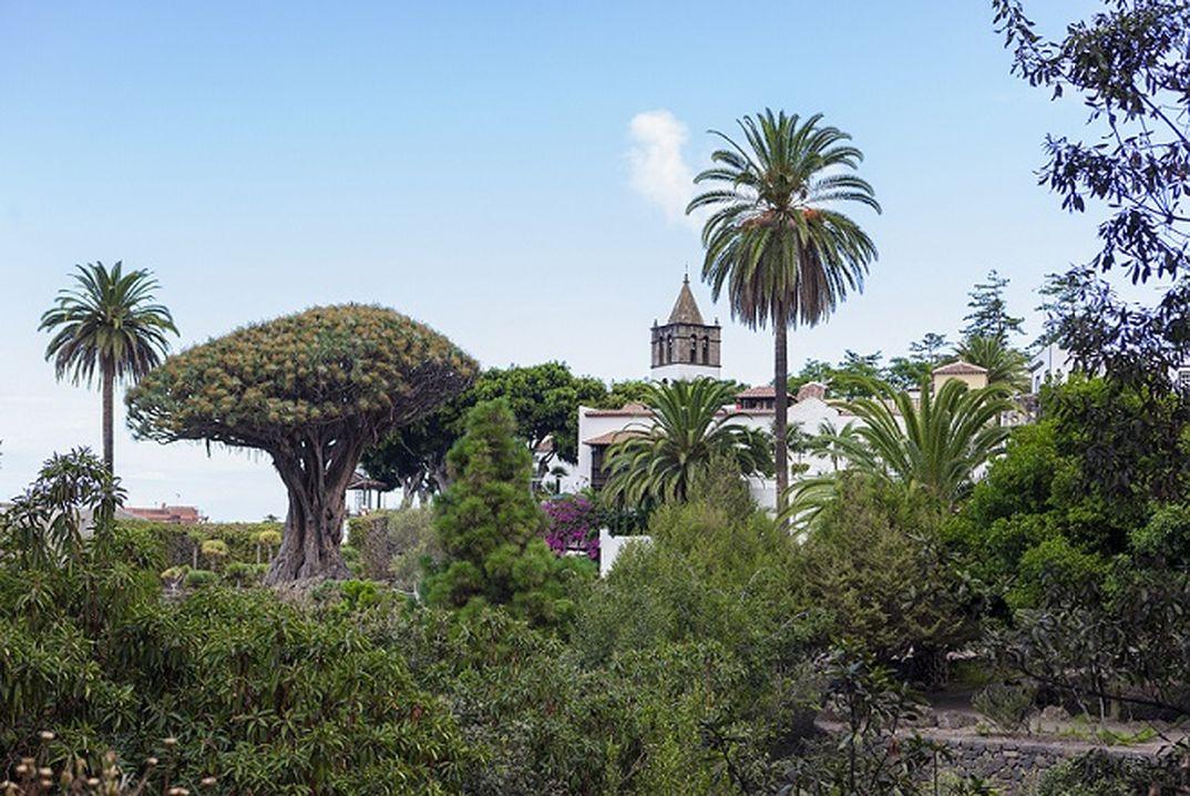Icod de los Vinos- Turismo de Tenerife