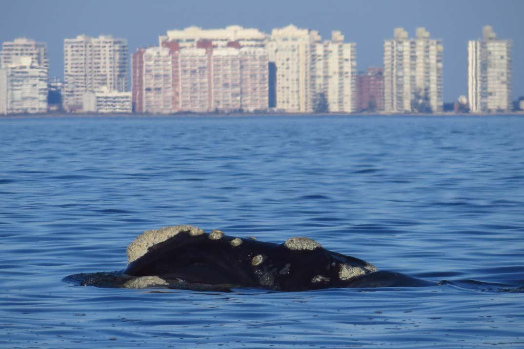 avistamiento-ballenas-2
