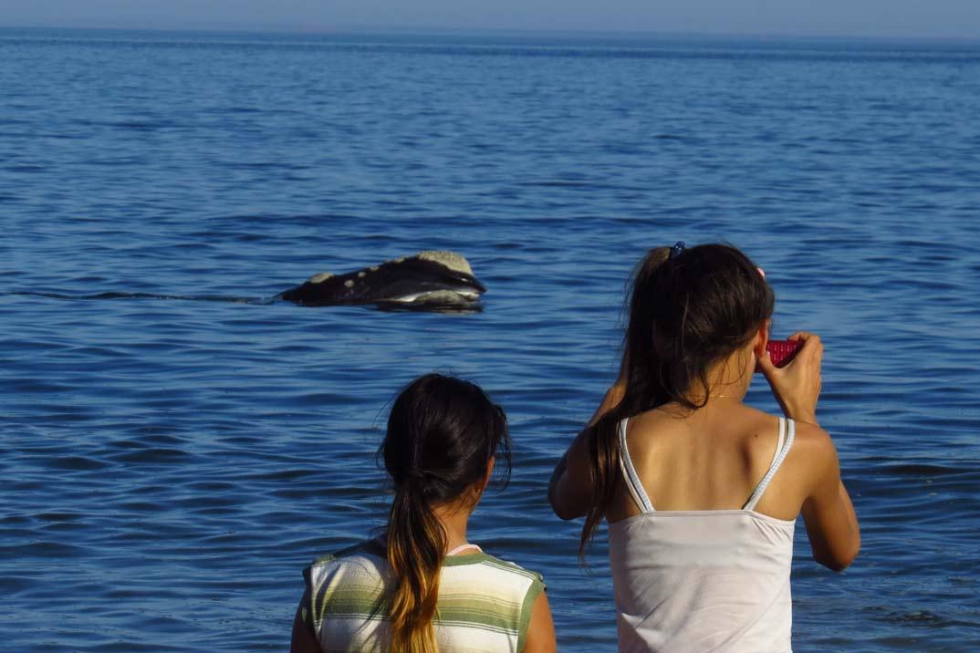 avistamiento-ballenas-3