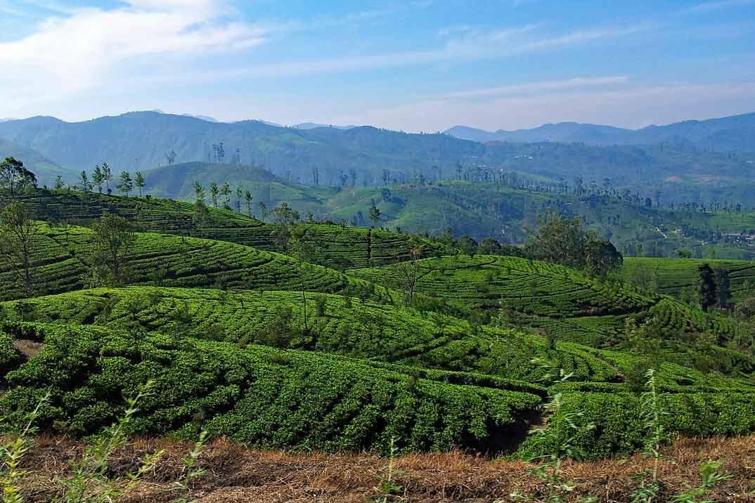 sri-lanka-nuwara-eliya-a-ella-plantaciones-2
