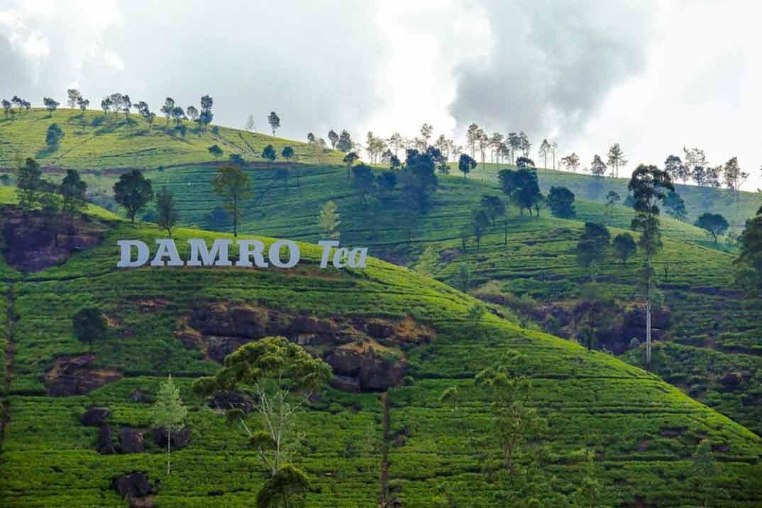 sri-lanka-nuwara-eliya-damro-tea