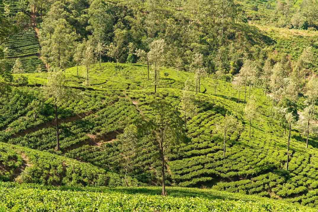 sri-lanka-nuwara-eliya-plantaciones