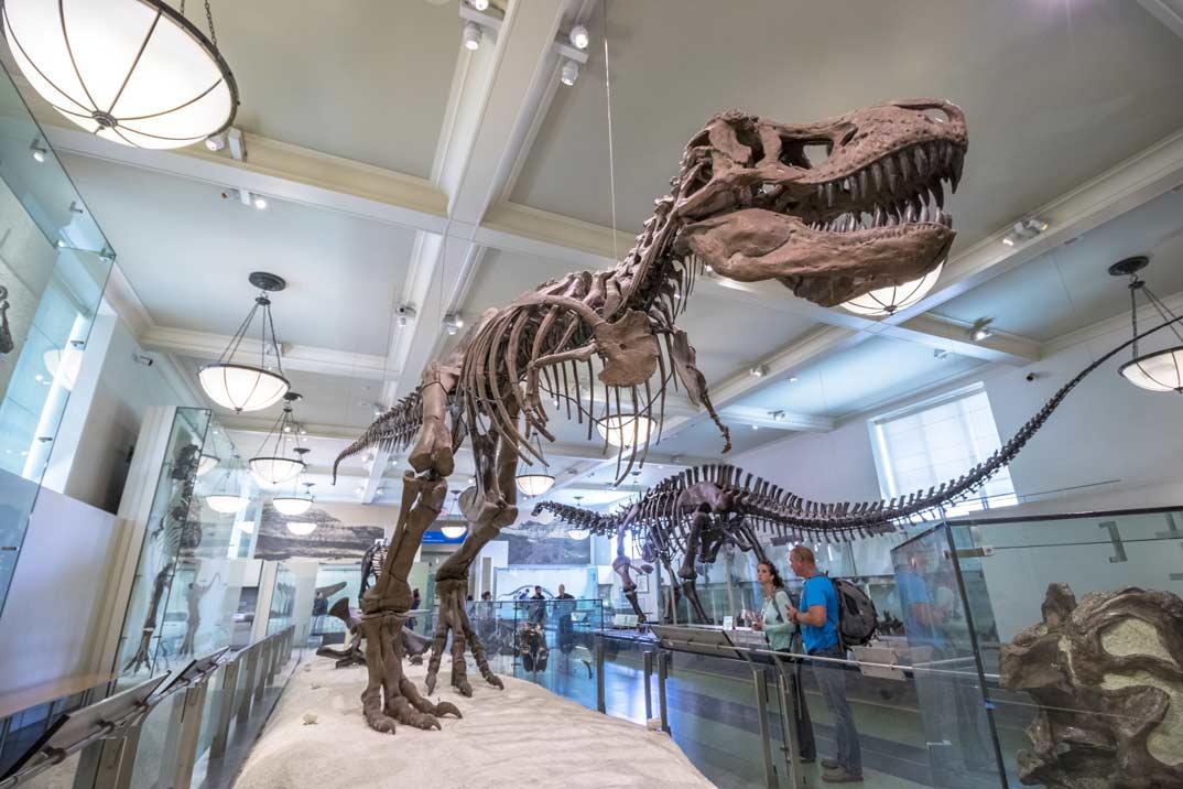 Friends-museo-historia-natural-nueva-york