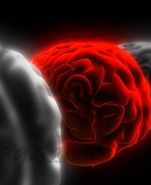 Cómo mantener tu cerebro en forma