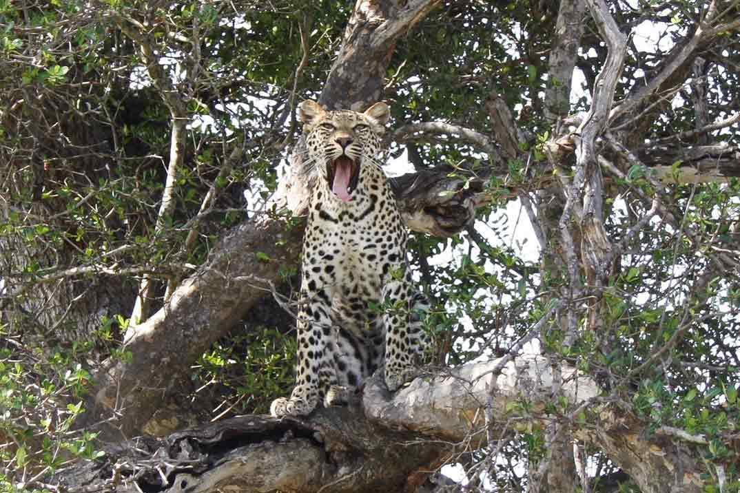 Lo mejor de Sri Lanka: Parque Nacional Yala