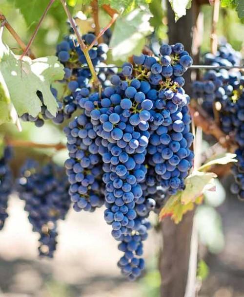 Placeres vinícolas: Una ruta por la Rioja Alavesa
