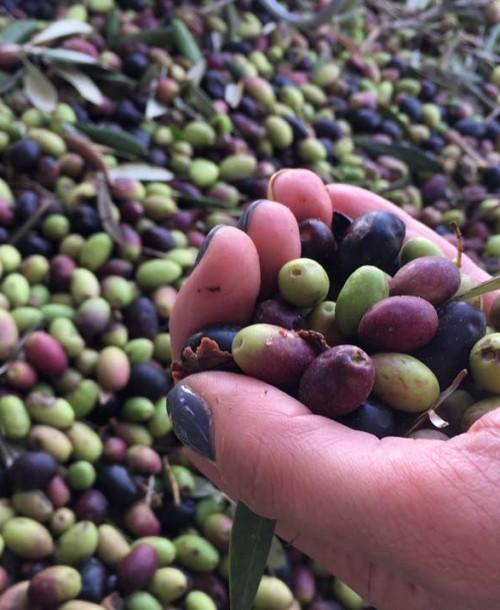Sierra Mágina: Descubriendo su primer Aceite de Oliva Virgen Extra