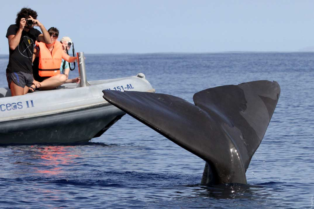avistamiento-ballena-madeira