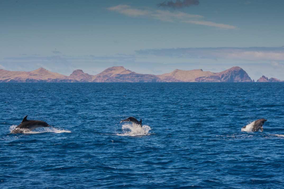 Madeira, un auténtico paraíso para el avistamiento de ballenas y delfines - magazinespain.com