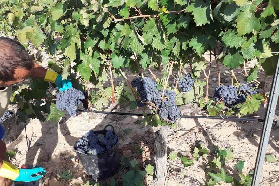 bodegas-flores-uvas-seleccionadas