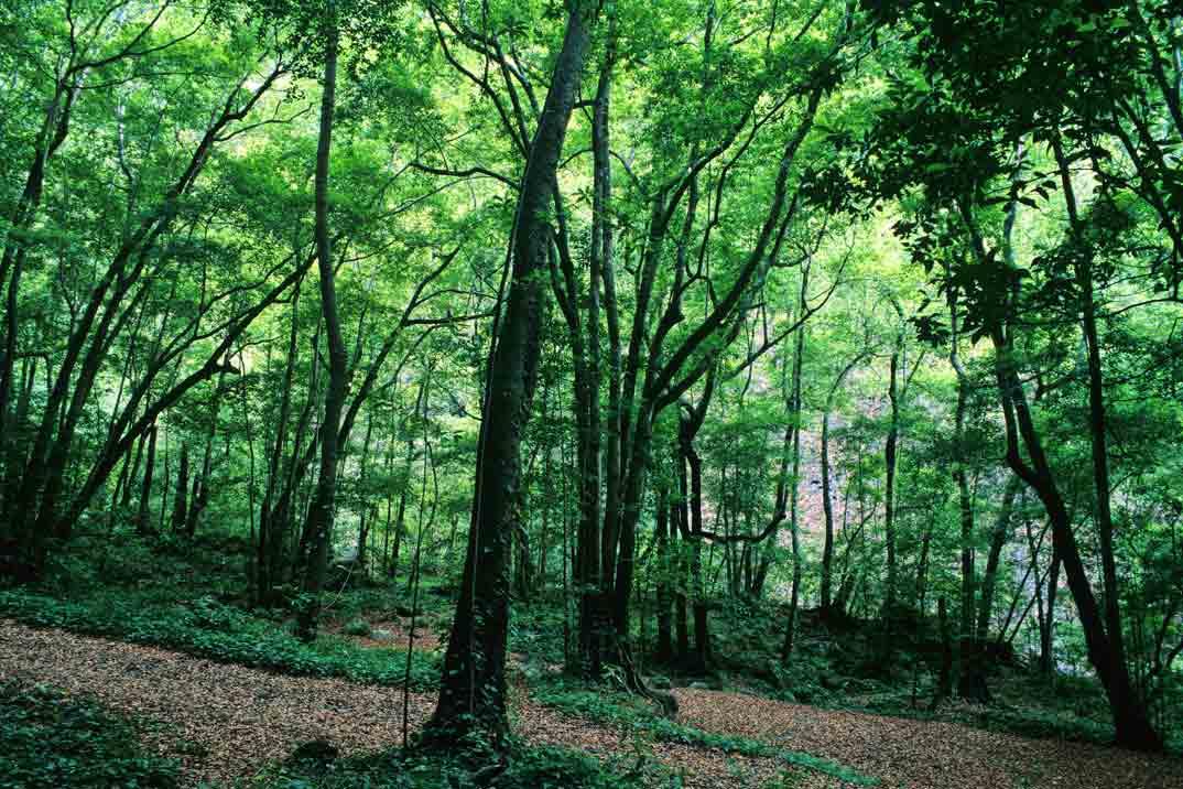 bosque-tilos-la-palma