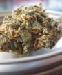 Alimentos y beneficios para la salud de las semillas de cannabis