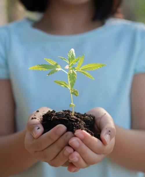¿Qué significa Sensi Seeds?