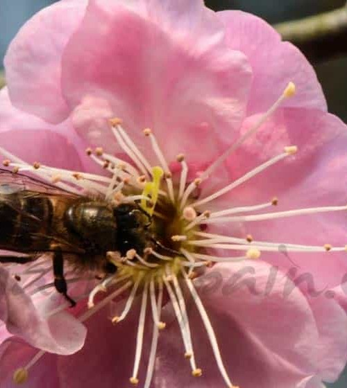 Alergias no sólo en primavera