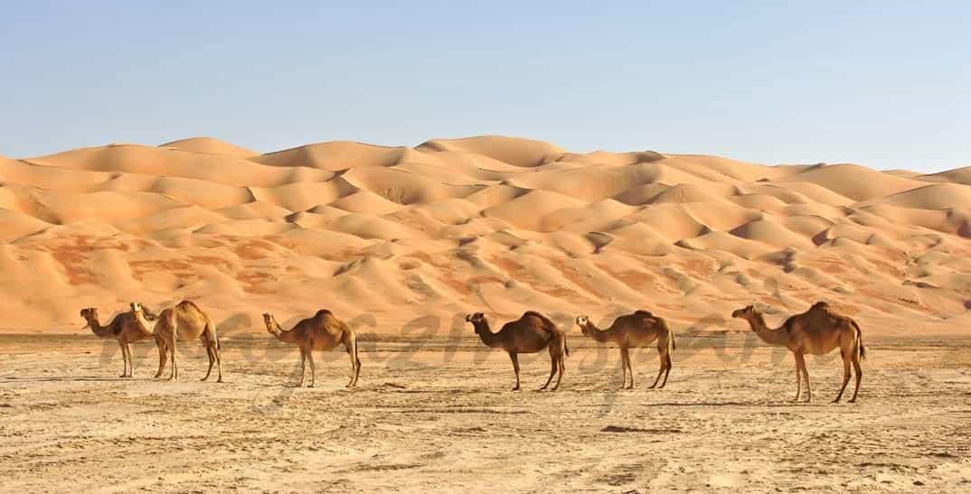Abu Dhabi, Oasis del Lujo