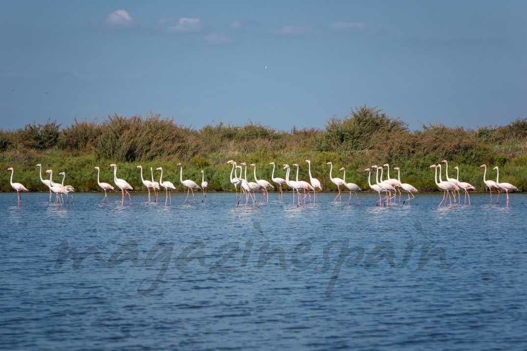 Reserva Natural del Estuario del Tajo