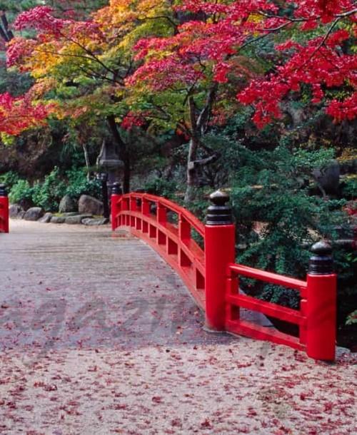 Los árboles rojos de Japón se adentran en la cocina
