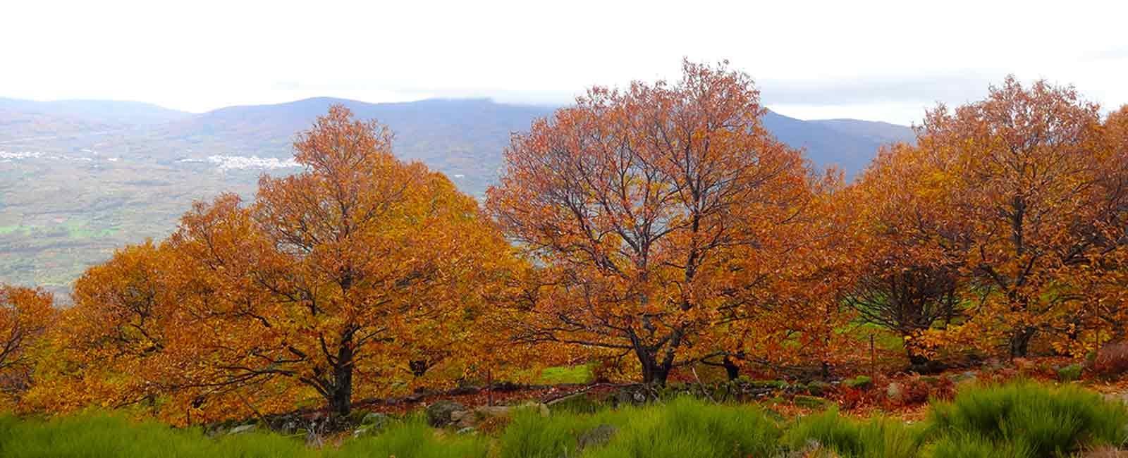 La Otoñada 2017 en el Valle del Jerte