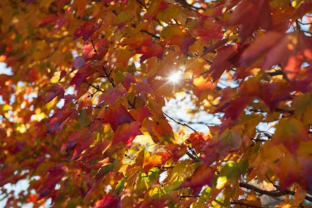 pelo otoño