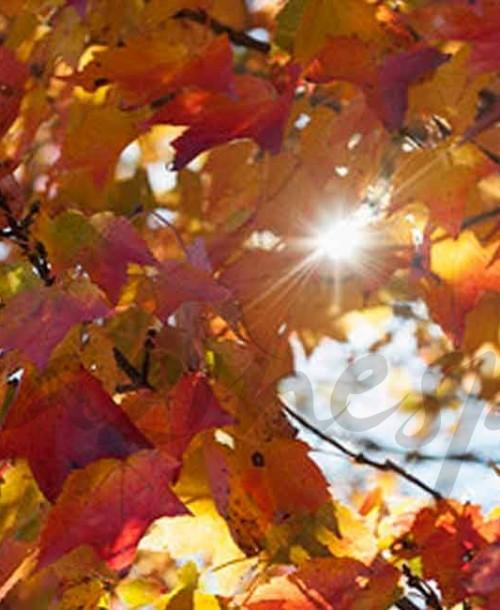 ¿Por qué se cae el pelo en otoño?