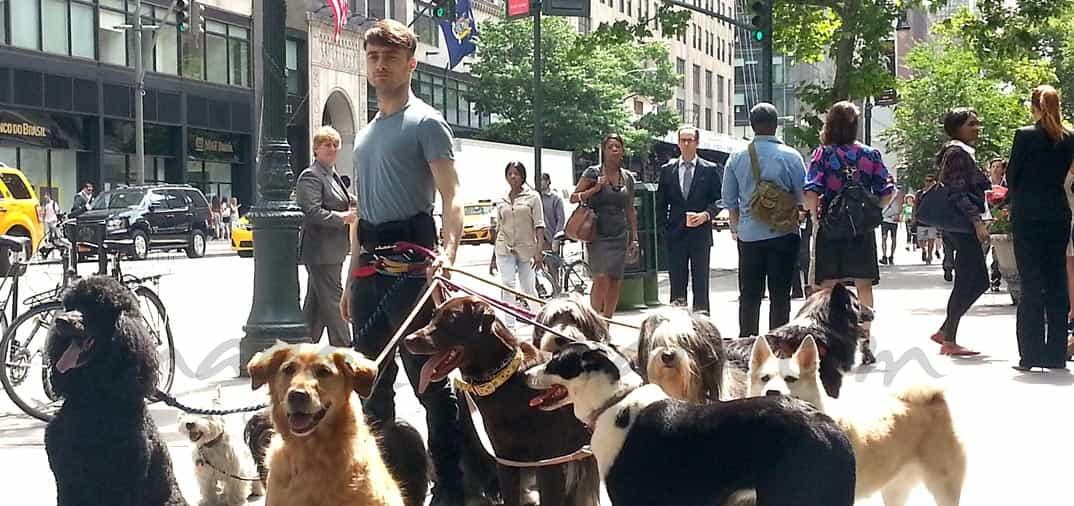 Daniel Radcliffe… el encantador de perros