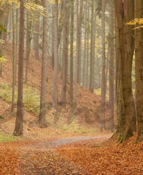 Viajes para un otoño inolvidable