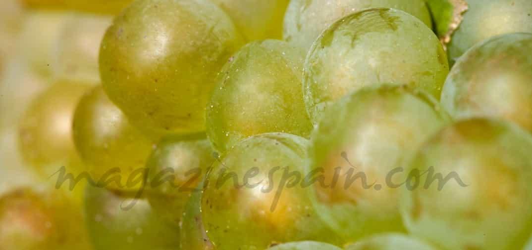 Elaboración de vinos blancos: Vinos Blancos II